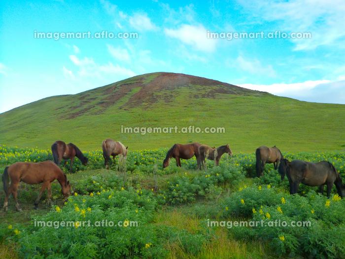 丘の下で放牧される複数の馬と青空の販売画像