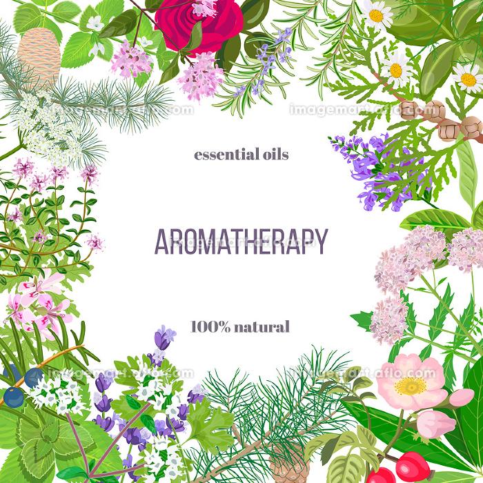 Big set of essential oil plants. Ornament with text. Rose, Geranium, lavender, mint, melissa, Chamomile, cedar, pine, juniper, rosehip etc.