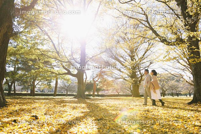 黄葉とシニア夫婦の販売画像