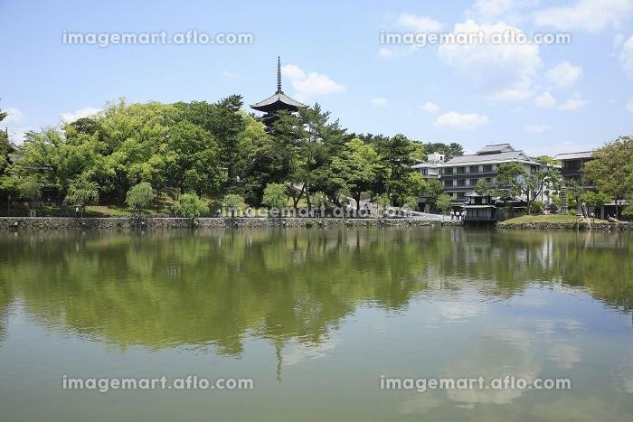 猿沢池と興福寺五重塔の販売画像