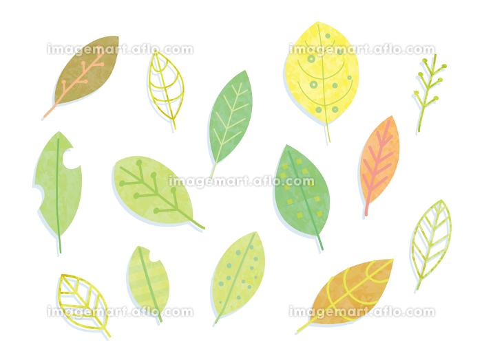 手描き 葉の販売画像