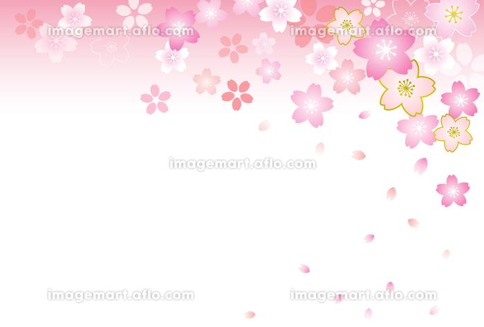 桜背景 ハガキテンプレートの販売画像