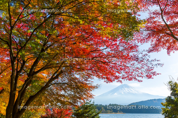 Kawaguchi Lake in the autumn seasonの販売画像