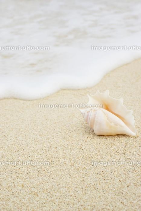 波打ち際に置かれた貝殻