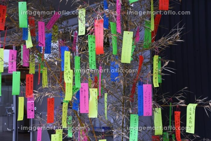 七夕祭り・短冊の販売画像