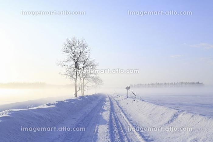 冬の一本道