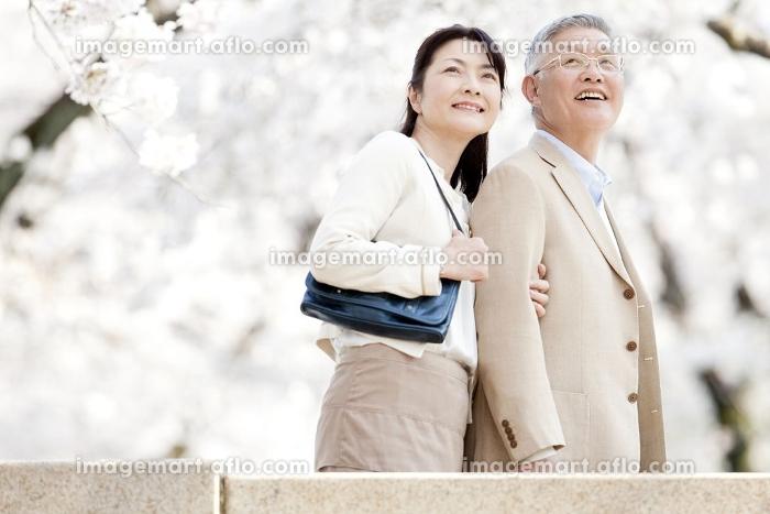 桜を見上げるシニアカップルの販売画像