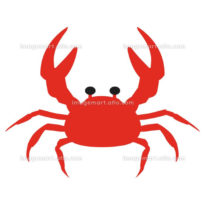 カニのイラスト 生き物 水族館 海 夏 学習 教材 ベクターの販売画像