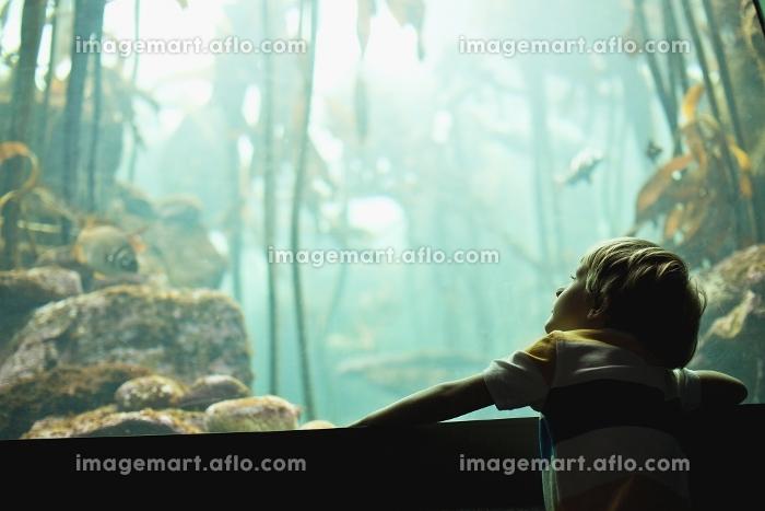 Boy admiring fish in aquariumの販売画像
