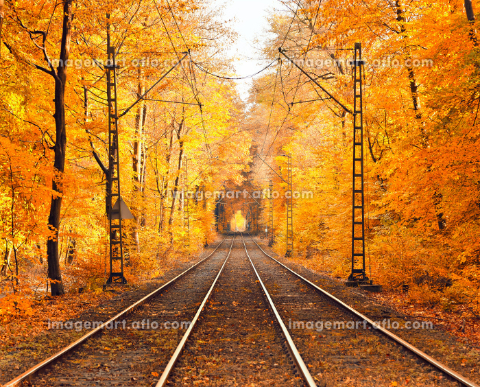 霧がかかった秋の公園の販売画像