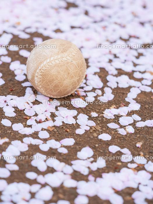 野球ボールと桜の花びらの販売画像