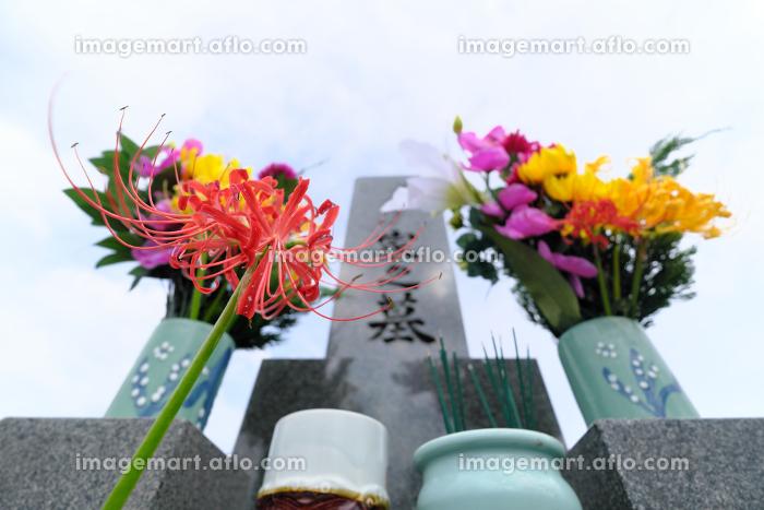 広大な空とお墓の前に咲く彼岸花のイメージの販売画像