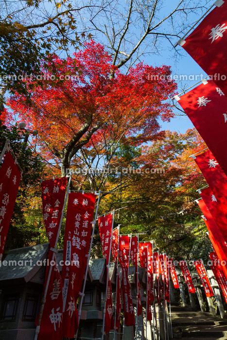 朝護孫子寺 (奈良県生駒郡 2012/11/19撮影)の販売画像