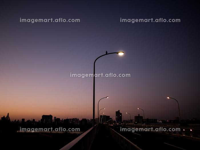 早朝の橋の風景 12月の販売画像