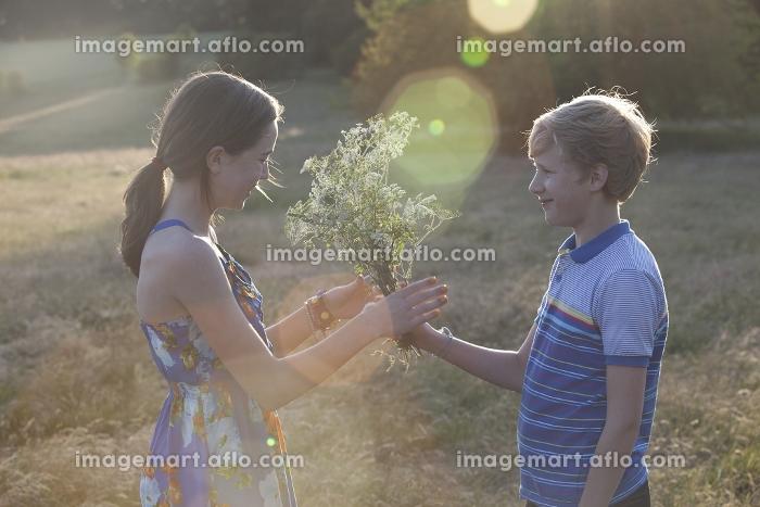 Boy giving girl flowers in fieldの販売画像