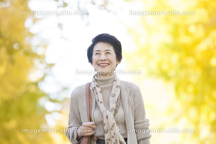 イチョウ並木を歩くシニア女性の販売画像