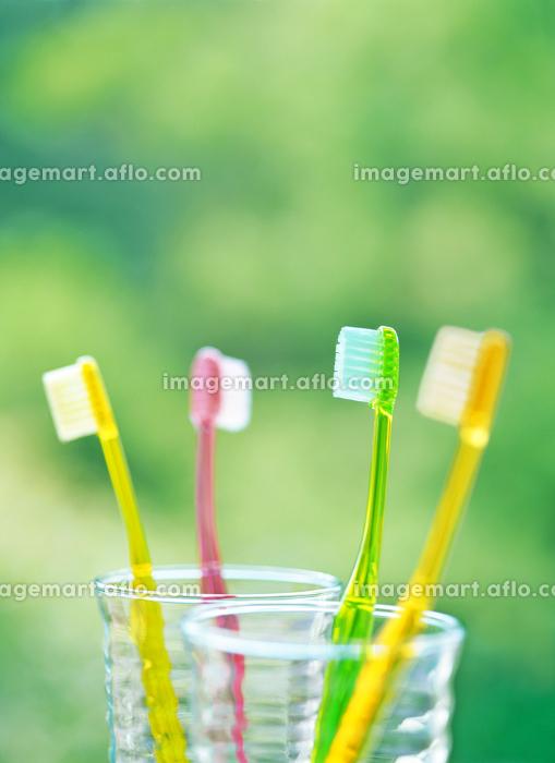 4本の歯ブラシの販売画像