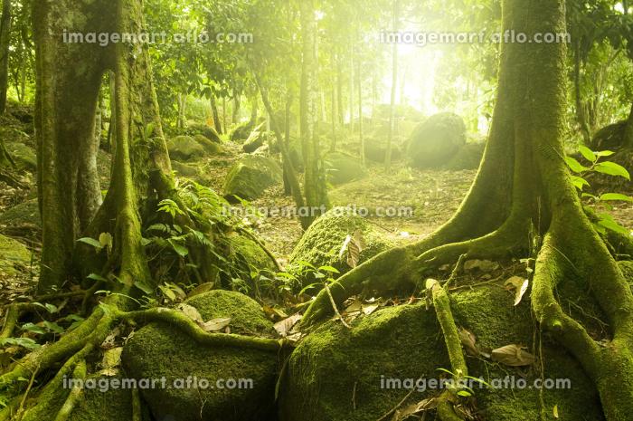環境 木 石の販売画像