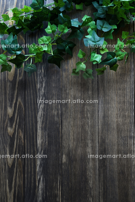 背景素材 植物 葉の販売画像