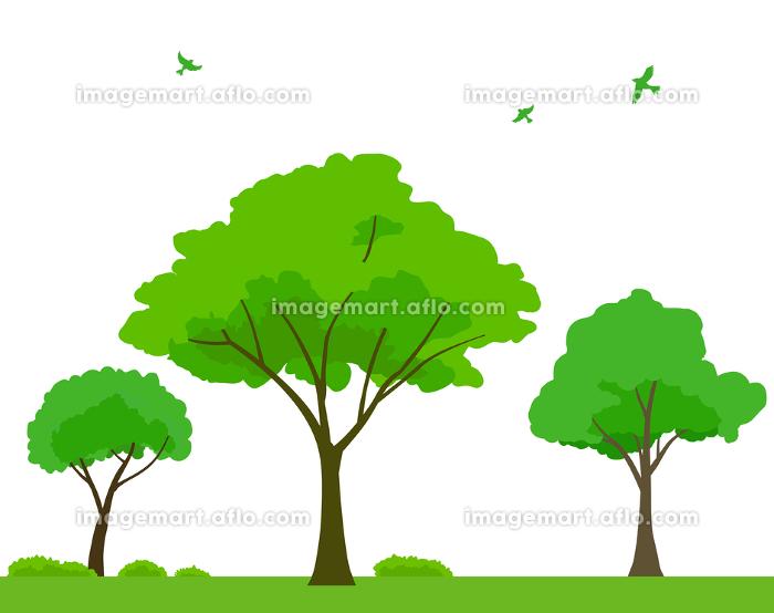 緑木と飛ぶ鳥の背景素材の販売画像