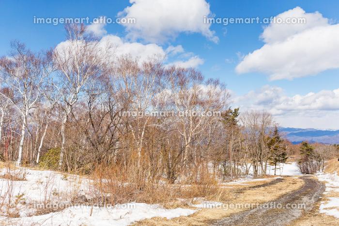 Beautiful winter landscapeの販売画像