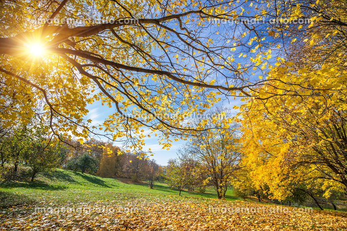 Sunny autumn in countrysideの販売画像