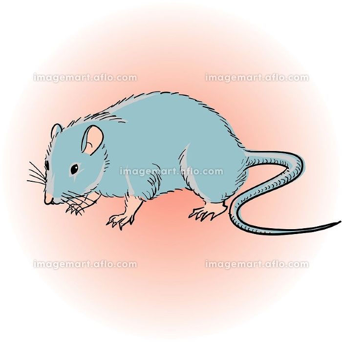 ネズミの販売画像