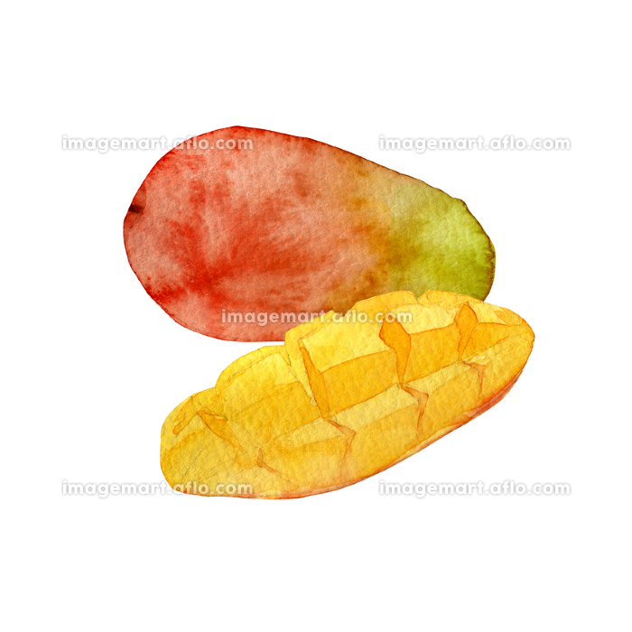 夏 トロピカルフルーツ マンゴー 水彩 イラストの販売画像