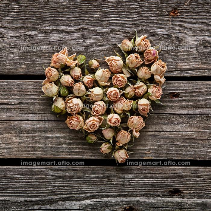 バラ 植物 ビンテージの販売画像