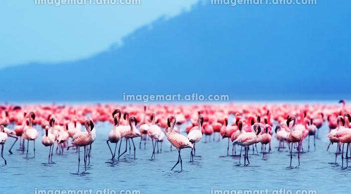 ケニア共和国 生物 東アフリカの販売画像