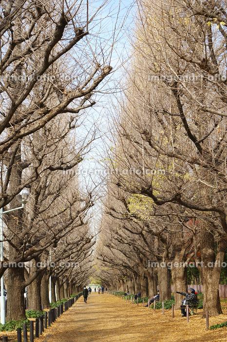 神宮外苑の並木道の販売画像