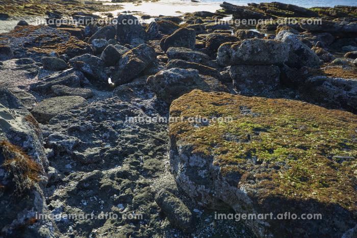 波と風で砕かれていく海岸のゴロタ石