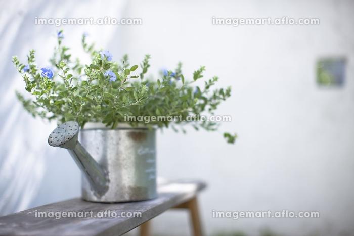 庭に置かれた観葉植物の販売画像