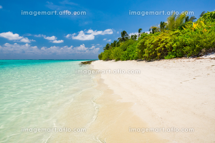 Beautiful ocean beachの販売画像