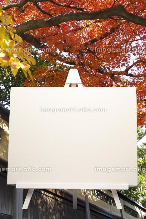 紅葉とイーゼルの合成の販売画像