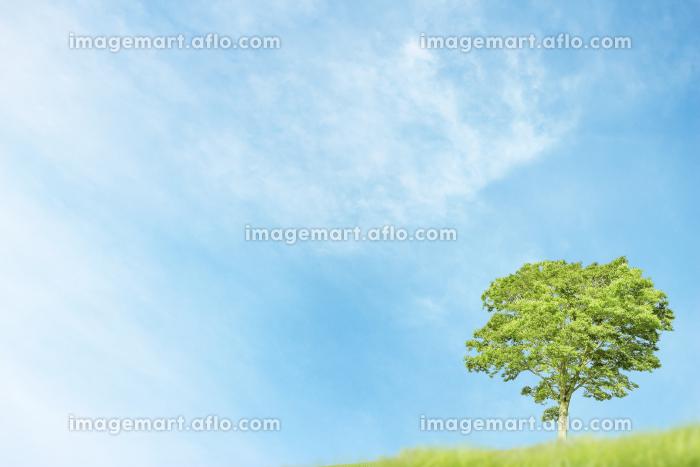 青空と一本の木の背景の販売画像