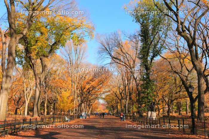 セントラルパーク モール 秋の装い ニューヨーク アメリカ合衆国の販売画像