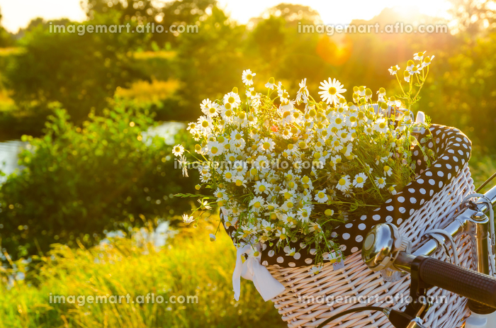 baskets with daisies at sunsetの販売画像