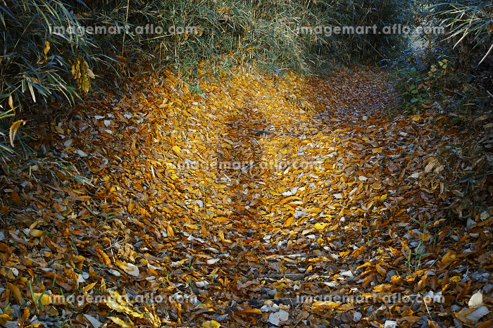 落ち葉が溜まった山道に差し込む日差しと人の影の販売画像