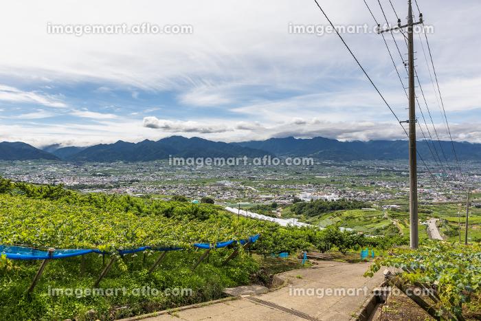日本の山梨県・7月のぶどう畑と甲府盆地の販売画像