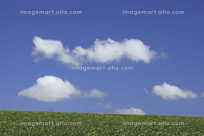 豆畑と雲の販売画像