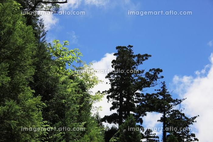 樹木の販売画像