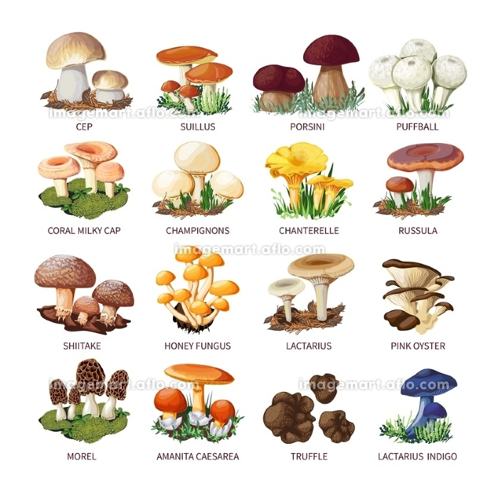 Collection Of Edible Mushrooms And Toadstools. Colorful forest wild collection of assorted edible mushrooms and toadstools with names in cartoon style isolated vector illustration