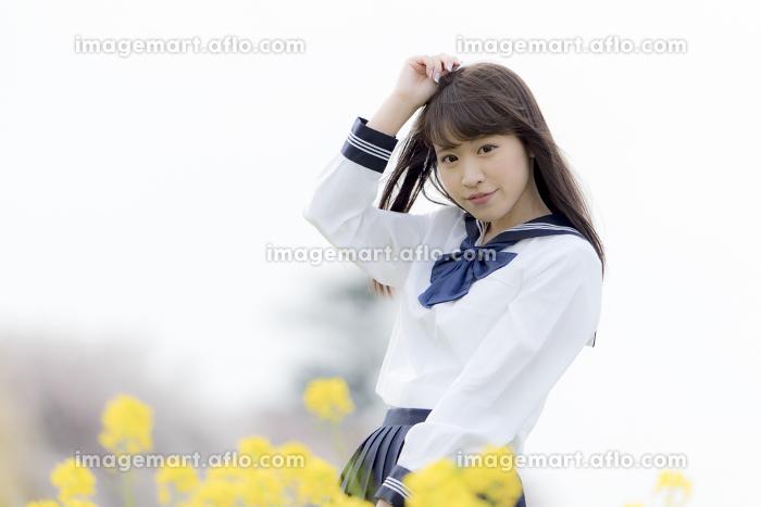 菜の花畑に立つ女子高生の販売画像