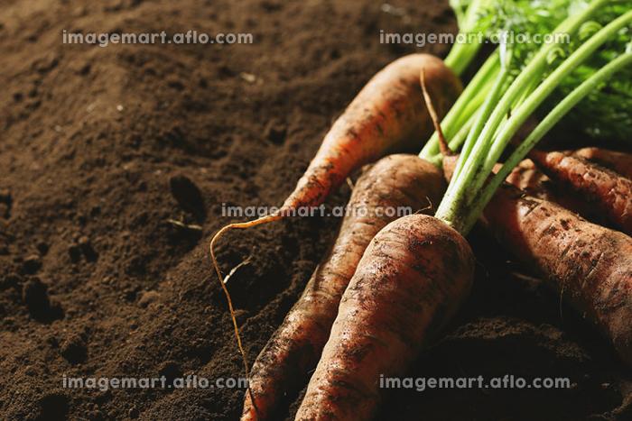 有機野菜 にんじん