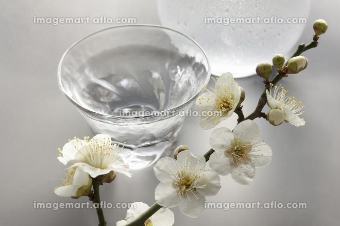 日本酒と梅の花の販売画像