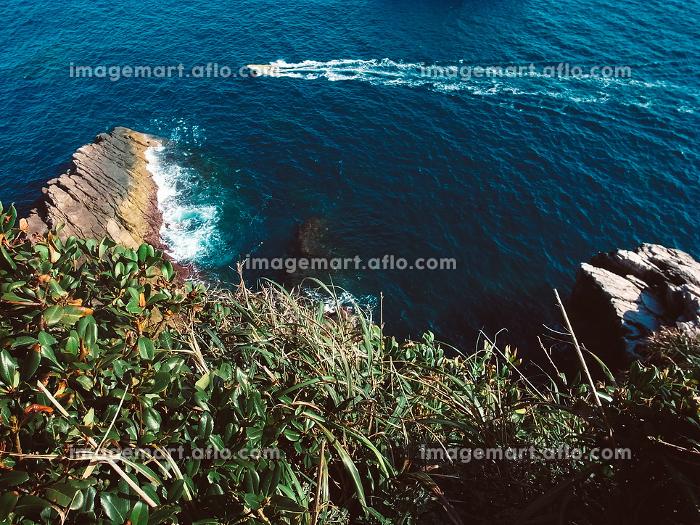 崖の上の森林から見える海と船の販売画像