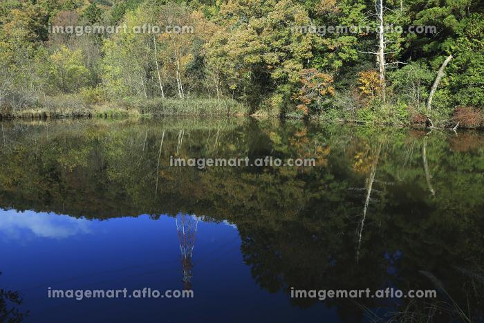 秋の風景の販売画像