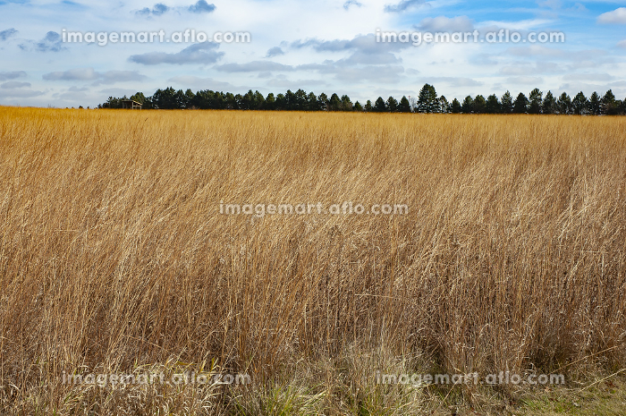 Large Field of Prairie Grass in the Fall