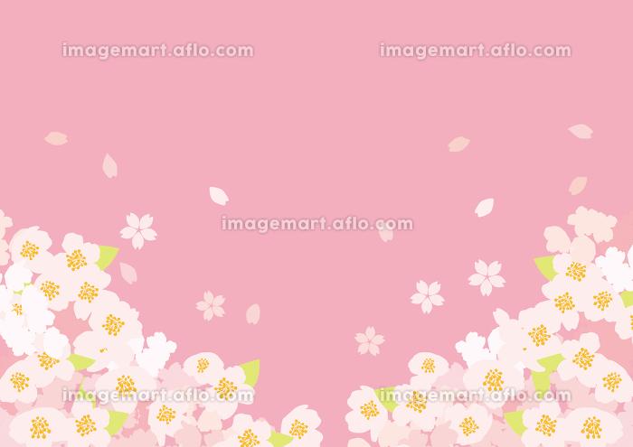 ふわふわした桜の背景イラスト イメージマート